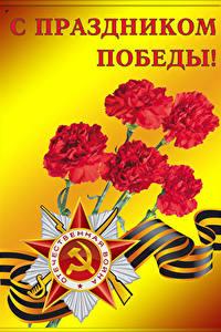 壁纸、、祝日、戦勝記念日、ナデシコ、スターの装飾、リボン、ロシアの、
