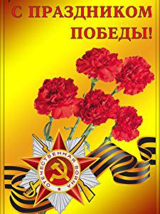 Papéis de parede Feriados Dia da Vitória 9 de maio Dianthus Estrela da decoração Fita Russo