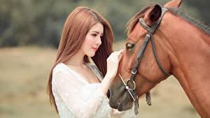 Hintergrundbilder Hauspferd Asiaten Bokeh 2 Hand Braunhaarige Chinese ein Tier Mädchens