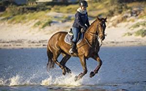 Fotos Hauspferd Pferdesport Helm Sitzend Lauf Wasser spritzt Tiere Mädchens