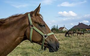 Hintergrundbilder Pferd Kopf 1ZOOM ein Tier