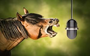 Hintergrundbilder Hauspferd Mikrofon Komische Kopf ein Tier