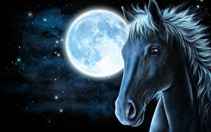 Fotos Pferde Gezeichnet Nacht Mond Kopf Tiere