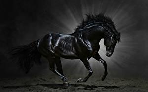 Hintergrundbilder Pferd Lichtstrahl Schwarz Tiere
