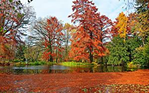 Fotos Ungarn Park Herbst Teich Bäume Blatt Botanical garden Szeged Natur Natur