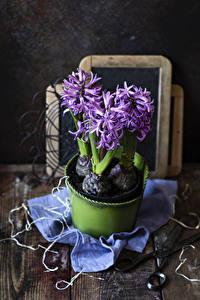Fotos Hyazinthen Bretter Violett Blumen