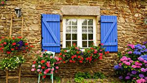 Bilder Hortensien Storchschnäbel Petunien Fenster Wände Natur