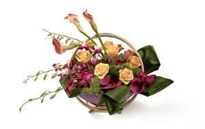Hintergrundbilder Ikebana Rosen Calla palustris Orchideen Weißer hintergrund Blumen
