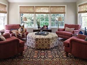 Fotos Innenarchitektur Design Wohnzimmer Sessel Teppich Shepherd