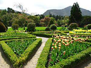 Bilder Irland Garten Tulpen Strauch Design Muckross House Gardens Natur