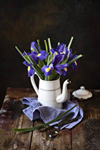 Fotos Schwertlilien Flötenkessel Bretter Blumen