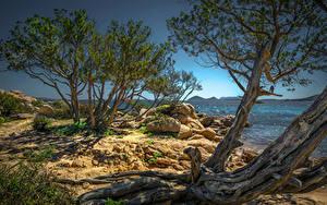 Картинки Италия Берег Камни Деревья Olbia, Sardegna