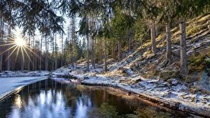 Fotos Italien Wald Bäume Sonne Schnee Lichtstrahl Veneto, Cortina d'Ampezzo