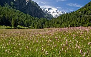 Bilder Italien Berg Wald Grünland Parks Alpen Gras Gran Paradiso national Park Natur