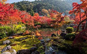 Bilder Japan Kyōto Park Flusse Bäume Natur