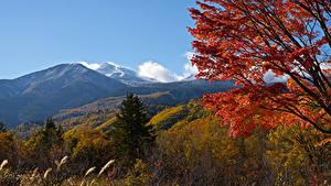 Fotos Japan Berg Herbst Ast Fichten Mount Norikura Natur