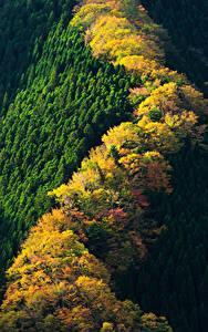 Hintergrundbilder Japan Park Wälder Herbst Von oben Nara Park