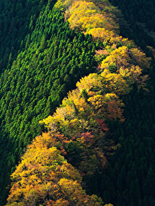 Pictures Japan Parks Forests Autumn From above Nara Park