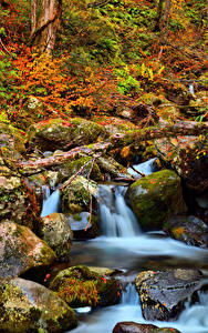 Fotos Japan Park Steine Herbst Laubmoose Bach Kongorinji Temple Shiga