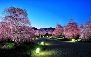 壁纸、、日本、東京都、公園、夕、花の咲く木、街灯、自然