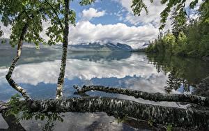 Hintergrundbilder See Wälder Gebirge Park USA Reflexion Baumstamm Birken Lake McDonald, Glacier National Park, Montana Natur