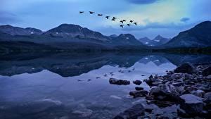 Hintergrundbilder See Steine Gebirge Vögel Park USA Abend Flug Glacier National Park, Rocky Mountains, Montana Natur