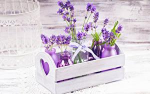 Hintergrundbilder Lavendel Bretter Flasche Ast Blumen