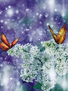 Picture Syringa Butterflies Branches White Flowers