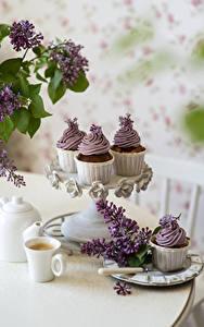 Bilder Syringa Stillleben Kaffee Cappuccino Cupcake Ast Tasse Blumen