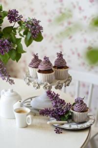 Bilder Syringa Stillleben Kaffee Cappuccino Cupcake Ast Tasse das Essen Blumen