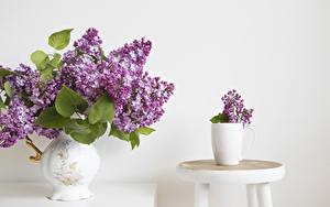 Fotos Flieder Weißer hintergrund Vase Kreise Blumen