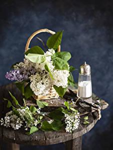 Fotos Syringa Weidenkorb Ast Blumen