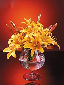 Hintergrundbilder Lilien Vase Gelb Blütenknospe Blumen