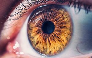 Fotos Makro Großansicht Augen Braunes