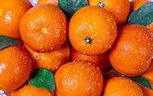 Hintergrundbilder Mandarine Nahaufnahme Tropfen Lebensmittel
