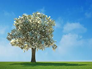 Fotos Geld Papiergeld Viel Bäume
