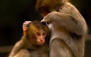 Fotos Affen Jungtiere Zwei