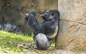 Photo Monkeys Sitting Branches Animals