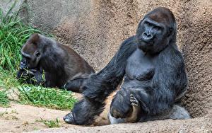 Bilder Affe Sitzend Zwei Tiere