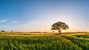 Bilder Morgen Sonnenaufgänge und Sonnenuntergänge Acker Himmel Bäume