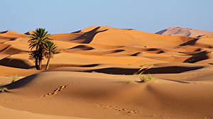 Wallpapers Morocco Desert Sand Palm trees Footprints Erg Chebbi Nature