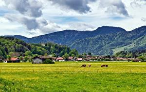 Fotos Berg Grünland Kuh Deutschland Dorf Bayern Aschau im Chiemgau, Rosenheim