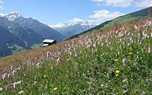 Hintergrundbilder Berg Schweiz Grünland Gras Grisons