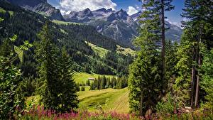 Fotos Gebirge Schweiz Landschaftsfotografie Bäume Alpen Gras Sanetschhore