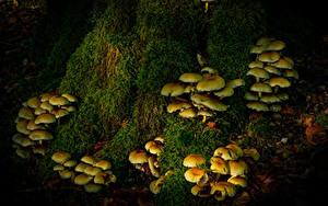 Fotos Pilze Blatt Laubmoose Natur