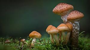 Bilder Pilze Natur Hautnah Laubmoose Natur