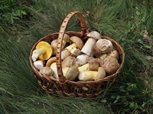 Bilder Pilze Natur Gras Weidenkorb