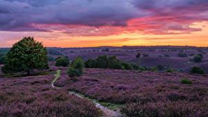 Fotos Niederlande Acker Lavendel Morgendämmerung und Sonnenuntergang Weg Natur