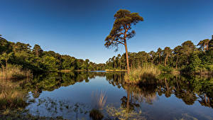 Hintergrundbilder Niederlande Wald See Himmel Bäume Reflexion Oisterwijk, North Brabant Natur