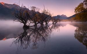 Fotos Neuseeland Herbst See Berg Nebel Bäume Glenorchy, Lake Wakatipu